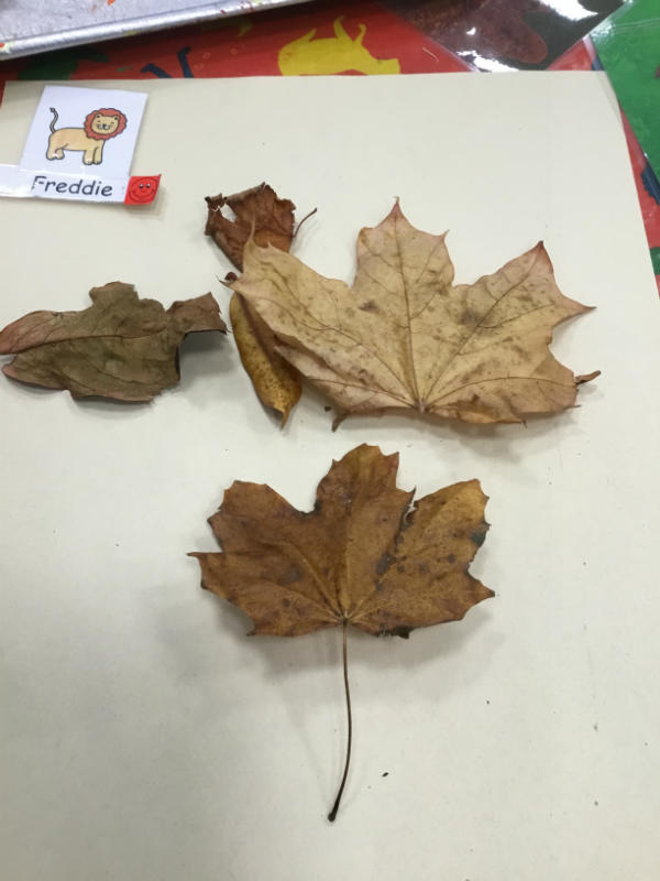 """a leaf butterfly. He flies all over."""