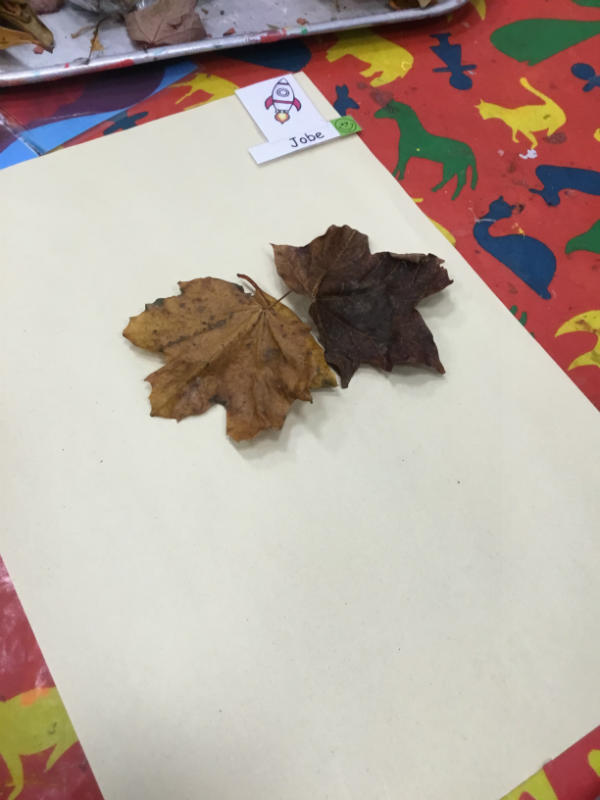 """A leaf butterfly. He flies everywhere and picks up a lot of cows!"""