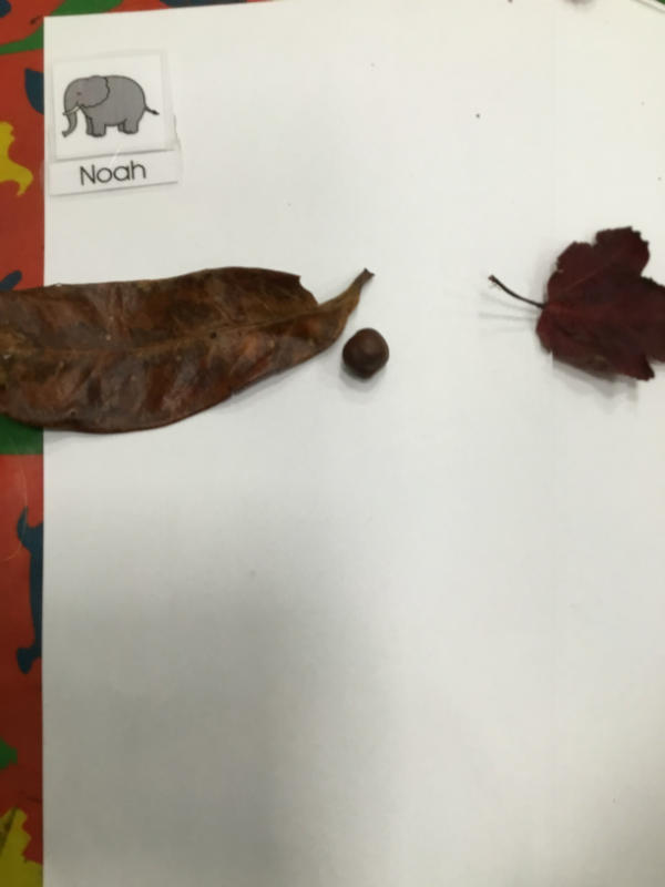 """I found a big leaf and a smaller one. The conker is nose for the butterfly."""