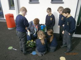 5B- Planting Flowers to be Eco Friendly